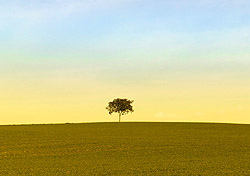 Lone tree (Photo: IndexOpen)