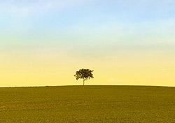 Lone tree (Photo: IndexOpen)