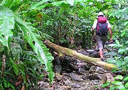 Entering a rainforest on Trinidad (Photo: Josh Roberts)
