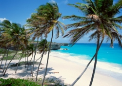 Beach - Palm Trees (Photo: ThinkStock/Creatas Images)
