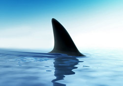 Shark fin (Photo: iStockphoto.com/iLexx)